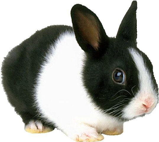 File:Smilodon.Bunny.jpg
