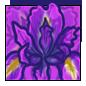 File:Tranquil Iris.png