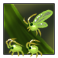 Aphid Friends.1482530739