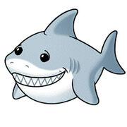 RescueReef's Shark
