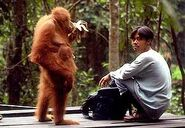 Orang utan and man