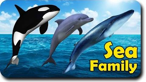 Video Sea Animal Finger Family Nursery Rhyme Whale Orca