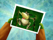 Weird Pixiefrog Picture