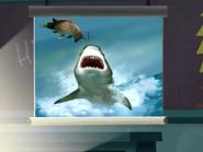 Shark and Armadillo