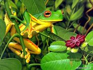 Frog-Wallpaper-frogs-7018060-1024-768