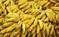 Bananas-925216.jpg