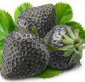 Black strawberries.jpg