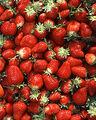 220px-Chandler strawberries.jpg
