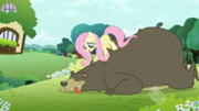 180px-Fluttershy Massaging Bear S2E3