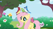 180px-Fluttershy with birds SE1EP3