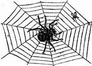 Spinne-Netz