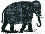 Wollelephant