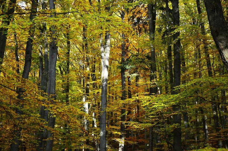 Autumn-1007411 960 720