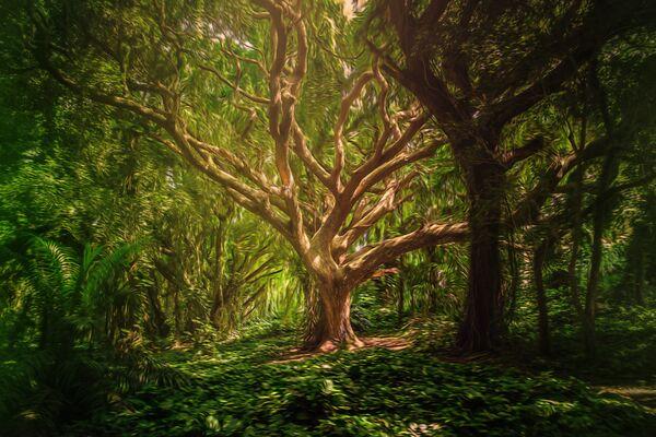 Wissal-Wald