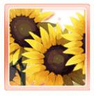 Midsummer Sunflowers Icon