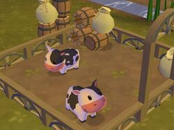 Roxie'sCows