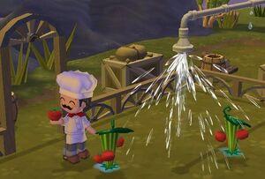 ChefGino'sFarm