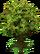 Medium Tree (Plant Island)