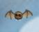 Spooktaclecritter1