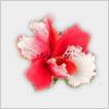 Hidden-orchidsflower