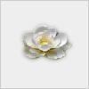 Hidden-lotusflower