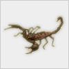 Hidden-nilescorpion