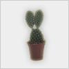 Hidden-cactus