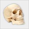 Hidden-skull