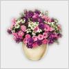 Hidden-petuniaflower