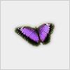 Hidden-butterfly