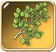 Aspen-branch
