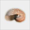 Hidden-shell2