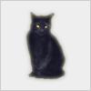 Hidden-blackcat