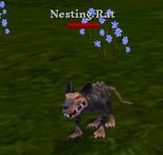 Level 5 nesting rat