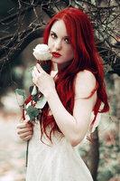 Red Rose by fhrankee