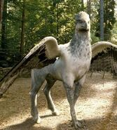 Buckpeak the Hippogriff (Harry Potter) profile