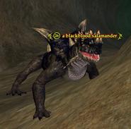 A blackblood salamander