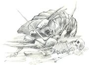 Golden clip crayfish - Cangrejo de pinza dorada
