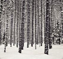Mi-woods