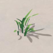 Gathering Plant Fiber