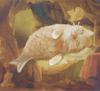 Art Catmaid