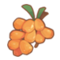 Palm Jujube