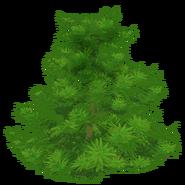 Tree Shrub Full