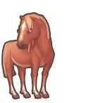 Catchcow middlehorse
