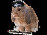 Polis kanin