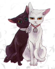 Shijima yoi cats