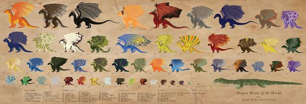 Dragon Size Ref