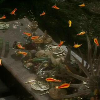 Птицы убирают остатки еды