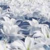 Kategoria-flora