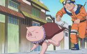 Tonton guía a Naruto hacia su destino, el equipo de Shizune